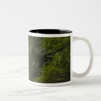 Mapari River, Mapari Rupununi, Guyana. Two-Tone Coffee Mug