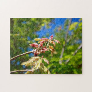Maple Buds Jigsaw Puzzle