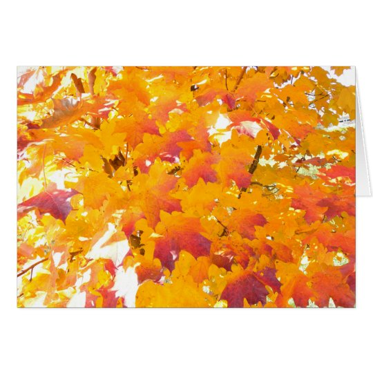 Maple fall colour card