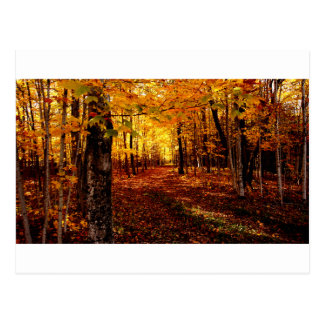 Maple Forest Fall Colour Postcard