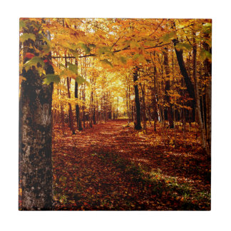 Maple Forest Fall Colour Tile
