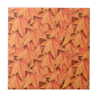 maple leaf in the autumn tile