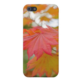 maple leaf iPhone 5/5s case savvy