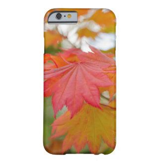 maple leaf iPhone 6 Barely There case Barely There iPhone 6 Case