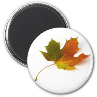 Maple Leaf Magnet