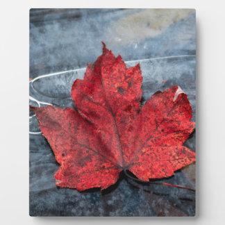 Maple leaf on ice plaque