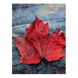 Maple leaf on ice postcard