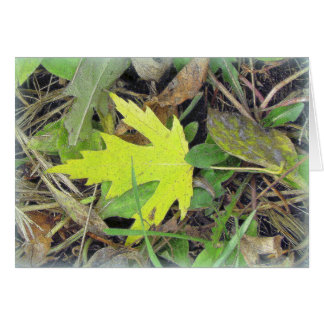 Maple Leaf on the grass Card