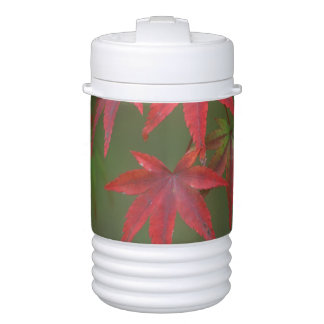 Maple Leaves, Katsura, Kyoto, Japan Drinks Cooler