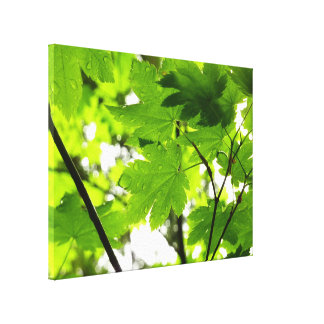 Maple Leaves with Raindrops Canvas Print