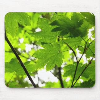 Maple Leaves with Raindrops Mouse Pad
