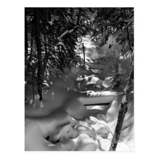 Maple Spring Postcard - 1
