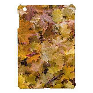 Maple Tree Fall Leaves Background Cover For The iPad Mini