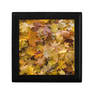 Maple Tree Fall Leaves Background Gift Box