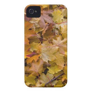 Maple Tree Fall Leaves Background iPhone 4 Case