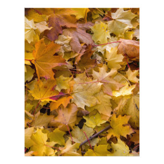 Maple Tree Fall Leaves Background Letterhead
