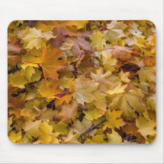 Maple Tree Fall Leaves Background Mouse Pad