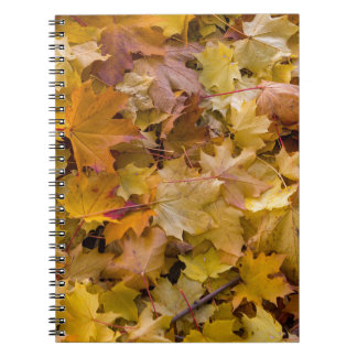 Maple Tree Fall Leaves Background Notebook