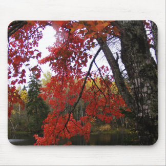 Maple Tree in autumn Mouse Pad