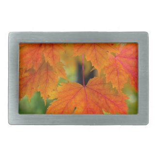 Maple Tree Leaves in Fall Color Closeup Belt Buckle