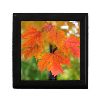 Maple Tree Leaves in Fall Color Closeup Gift Box