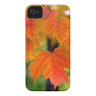 Maple Tree Leaves in Fall Color Closeup iPhone 4 Case