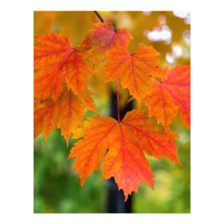 Maple Tree Leaves in Fall Color Closeup Letterhead