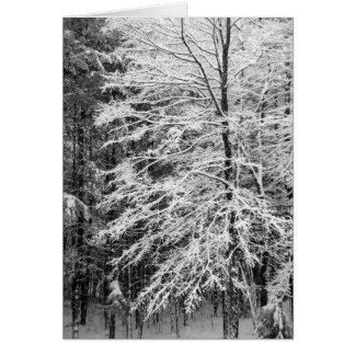 Maple Tree Outlined In Snow Card