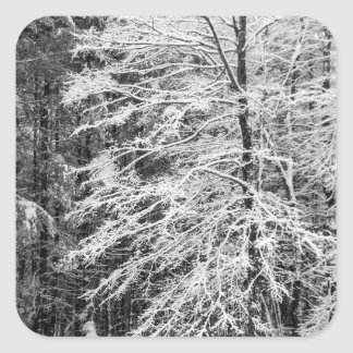 Maple Tree Outlined In Snow Square Sticker