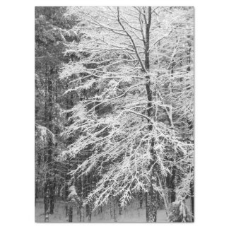 Maple Tree Outlined In Snow Tissue Paper