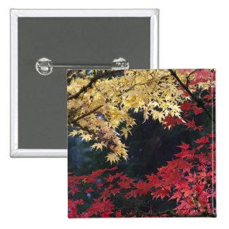 Maple trees in autumn color 2 inch square button