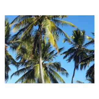 Maragogi palms postcard