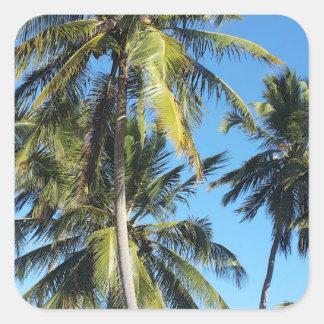 Maragogi palms square sticker