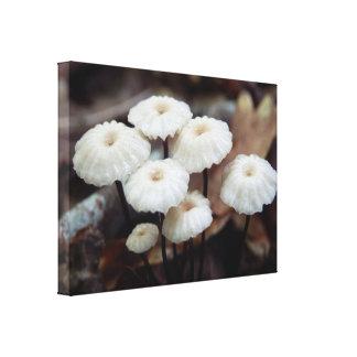 Marasmius rotula Mushroom Canvas Print