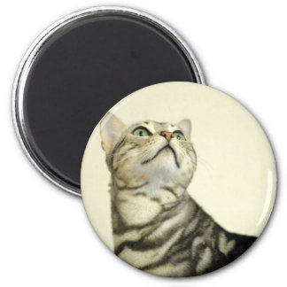 Marble Bengal Cat 2 Inch Round Magnet