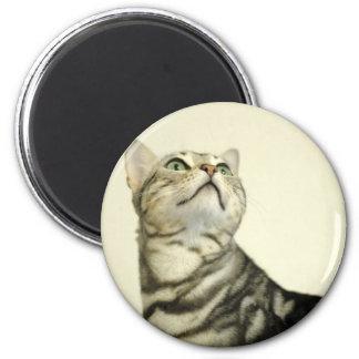 Marble Bengal Cat Magnet