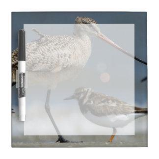 Marbled godwit (Limosa fedoa), Little St Simon's Dry Erase Boards