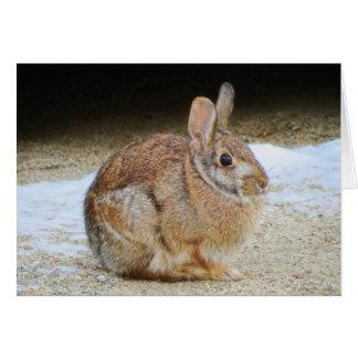 March Rabbit Card