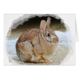 March Rabbit with Vignette Card