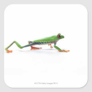 Marche observée par rouge de grenouille d arbre autocollants carrés