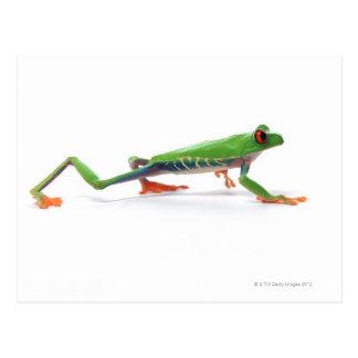 Marche observée par rouge de grenouille d arbre cartes postales