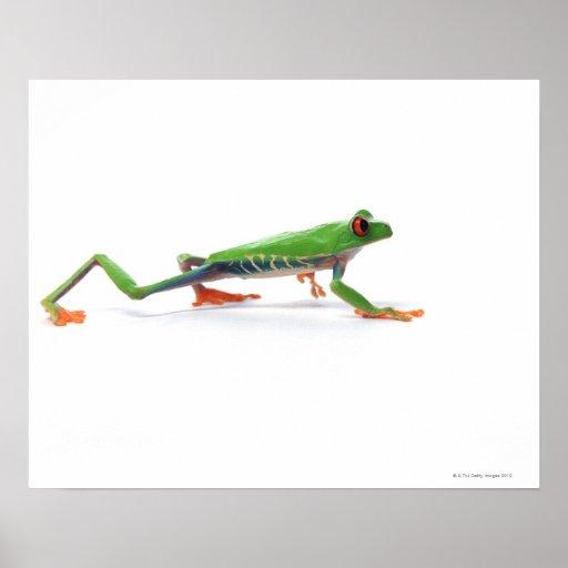 Marche observée par rouge de grenouille d'arbre posters