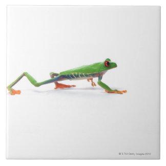 Marche observée par rouge de grenouille d'arbre carreaux