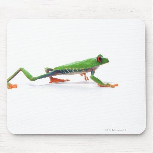 Marche observée par rouge de grenouille d'arbre tapis de souris
