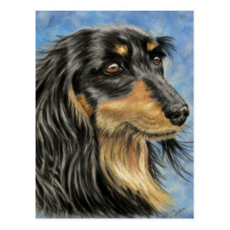 Marcus - Long Haired Dachshund Art Postcard