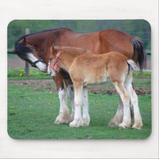 mare and colt 2 mousepad