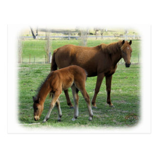 Mare and Foal 9P30D-175 Post Card