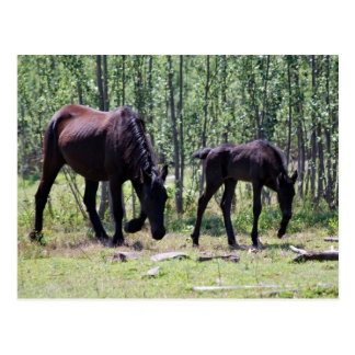 Mare and foal perfectly in sync postcard