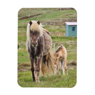 Mare and Foal Rectangular Photo Magnet