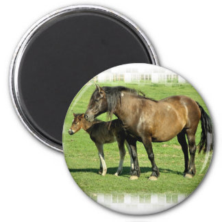 Mare and Foal Round Magnet Magnets